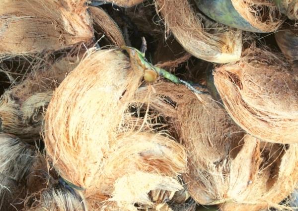 fibres naturelles de la noix de coco
